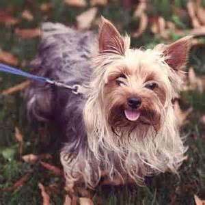 good house dogs petcarerx