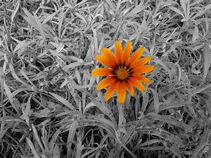 Black And White Photography With Color Splash Of Flowers ...