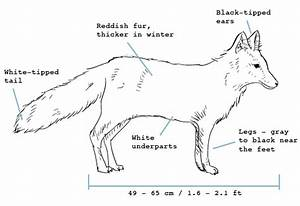 arctic fox wiring diagram coleman wiring diagram wiring With arctic fox diagram