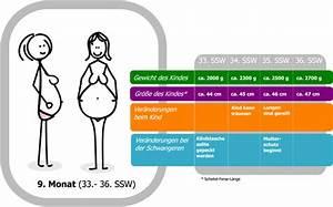 Gewicht Baby Ssw Berechnen : 33 ssw schwangerschaftswoche schwangerschaft f tus werdende mutter beschwerden ~ Themetempest.com Abrechnung