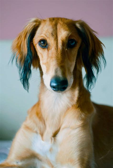 greyhound dog pet insurance compare plans prices