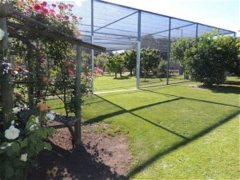 Protect Fruit Trees From Birds With Pest Control Methods
