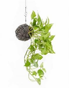 Kokedama Selber Machen : pop plant hanging string garden available at urban gardening ~ Orissabook.com Haus und Dekorationen