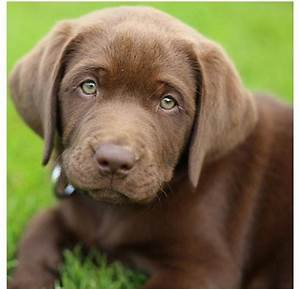 puppies with green eyes - Google Search | ʕ•ᴥ•ʔ Furry ...