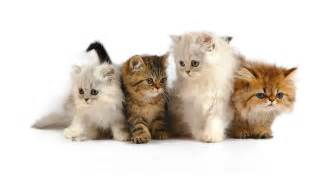 cat pic cat pictures search
