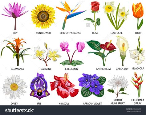 flower kinds with pictures flowers types