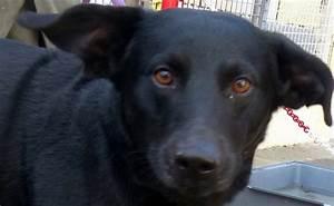 Spa Vannes Chien : chiens spa de vannes et de la r gion ~ Dallasstarsshop.com Idées de Décoration