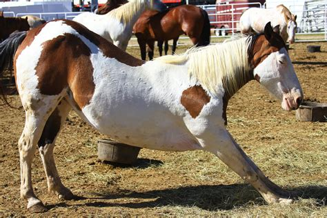 Treatment For Colic In Horses Best Horse 2017