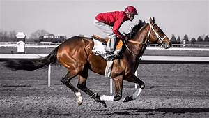The jockey or the horse: which do investors prefer ...