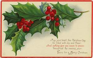 Stetcher Holly and Berries ~ Free Christmas Image | Old ...