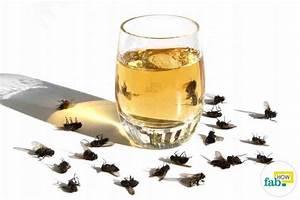 Se Débarrasser Des Mouches Naturellement : comment se d barrasser des mouches rapidement le nouveau paradigme ~ Melissatoandfro.com Idées de Décoration