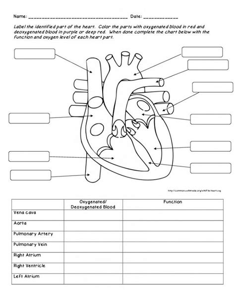 Human Heart Diagrams  Diagram Site