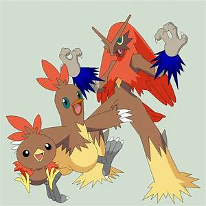 Torchic Mega Evolution | www.imgkid.com - The Image Kid ...