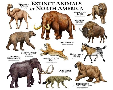extinct animals prehistoric species north america american mammals megafauna americas animal ancient wolf native ice age timeline lion human fine