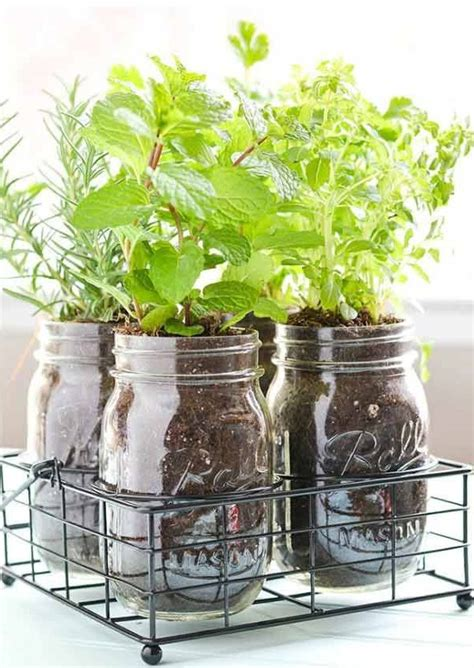 Best Windowsill Plants by How To Start Growing Herbs Indoors On A Windowsill