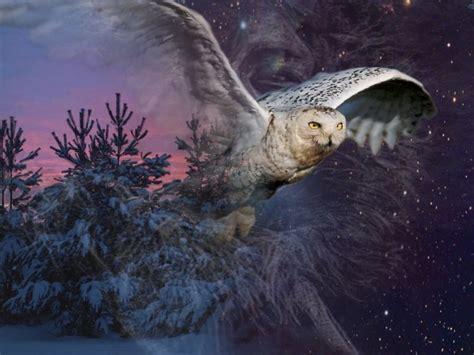 arriere plan bureau anim gratuit fonds d 39 écran animaux gt fonds d 39 écran oiseaux hiboux et