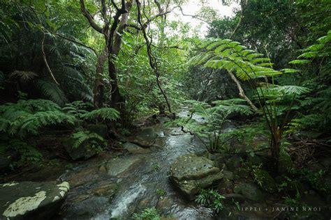 Janine King Hiking In Tropical Jungle Of Japan Iriomote Island Okina