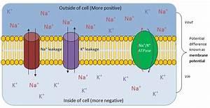 Brains  Blogs And Behaviour  Understanding The Nernst Equation
