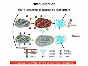 Basic Virus Cell Diagram