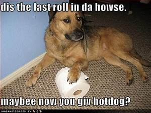 Funny Image Gallery: Funny Dog Pictures With Captions