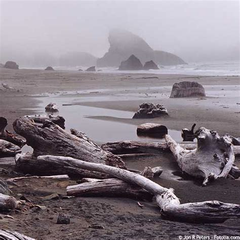 devis pour cuisine le bois flotté entre vents et marées 20 02 2009 dkomaison