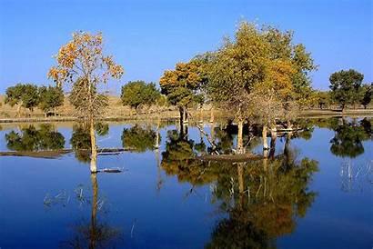 River Trees Tarim China Xinjiang Silk Road