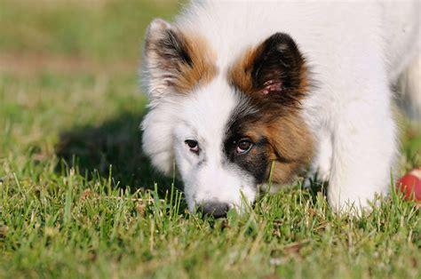 hunde entwurmen infos kosten tipps zur wurmkur