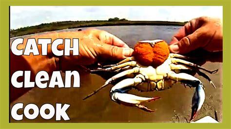 crabs catch eat cook clean