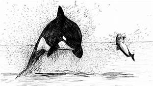 Killer Whale Dive by DrawnRon on DeviantArt