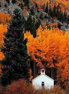 all alone in the fall forest | via Tumblr - image #3757896 ...