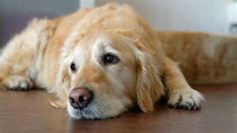 Divorce Can Have A Devastating Effect On Your Pets
