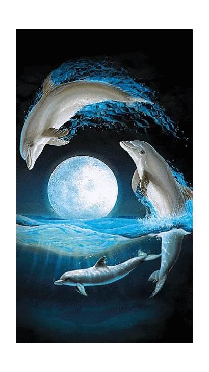 Google Salvo Golfinhos