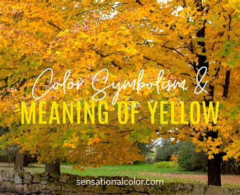 Meaning Of Yellow: Color Psychology And Symbolism