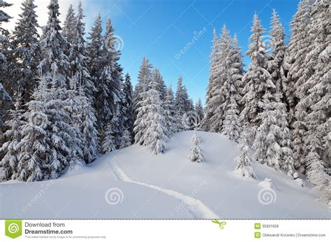 winter landscape   forest path royalty  stock