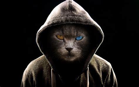 wallpaper  cat hood heterochromia