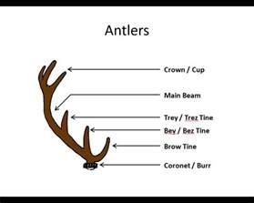 Deer Antler Shedding Season Uk by 100 Deer Antler Shedding Season Best 20 Deer Antler