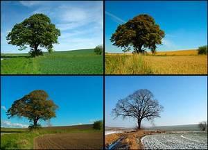 Bettdecke 240x220 4 Jahreszeiten : die 4 jahreszeiten foto bild natur jahreszeiten bilder auf fotocommunity ~ Bigdaddyawards.com Haus und Dekorationen