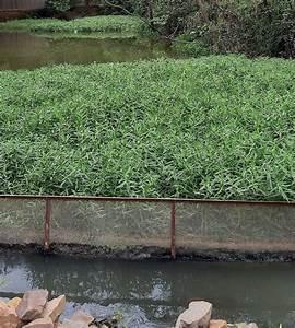 Photographs Of Wetlands  U2013 Rejuvenation Of The River Yamuna