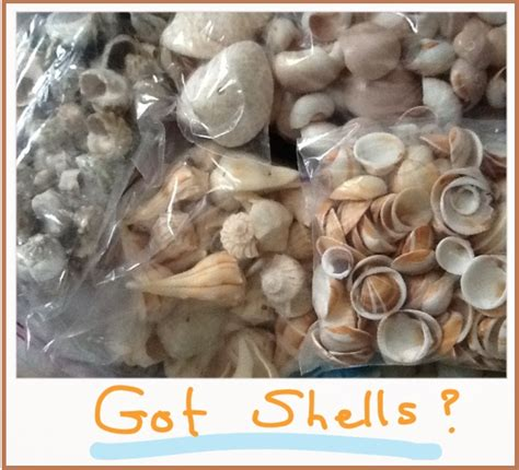 how to display shells ideas how to display seashells for the obsessed collector