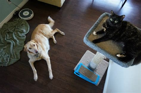 The Living Room Or Not Cat by Has Your Cat Through A Phase Catster