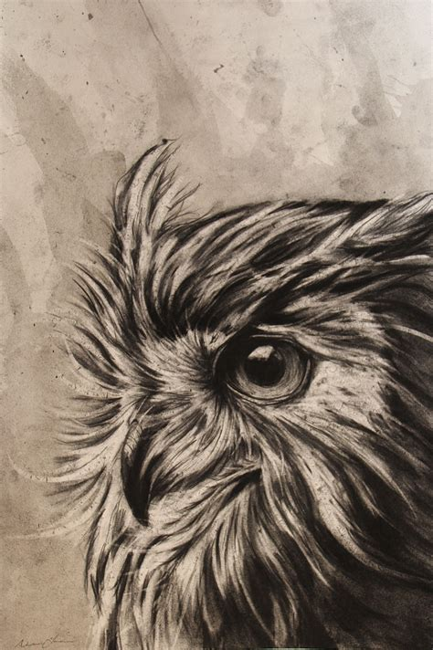 alexander landerman owl charcoal graphite animals