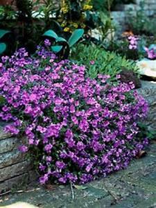 Plante De Bordure : petites fleurs vivaces pour bordures ~ Preciouscoupons.com Idées de Décoration