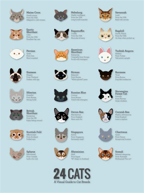 test to find out what breed my cat is