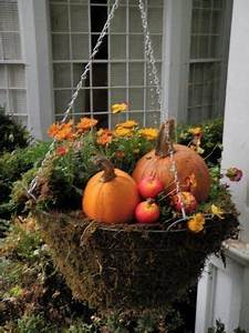 Fall Flowers & Mini Pumpkin Hanging Basket