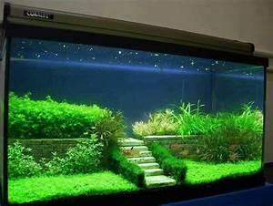 Great aquascaping:) Fish tanks/ terrariums/ fairy