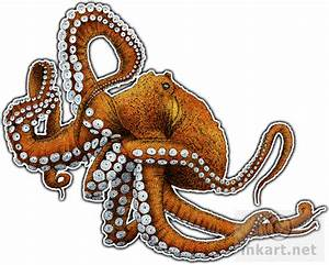 Giant Pacific Octopus (Octopus dofleini) Line Art and Full ...