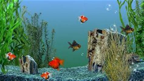 aquarium ecran de veille ecran de veille gratuit a telecharger