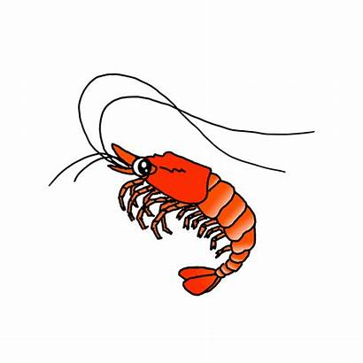 Shrimp Draw Sealife Drawing Easy Step Category