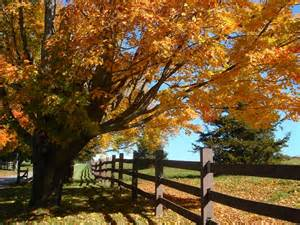 Country Fall Scenes