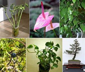 In Pics  Now  Plants For Your Personality Types